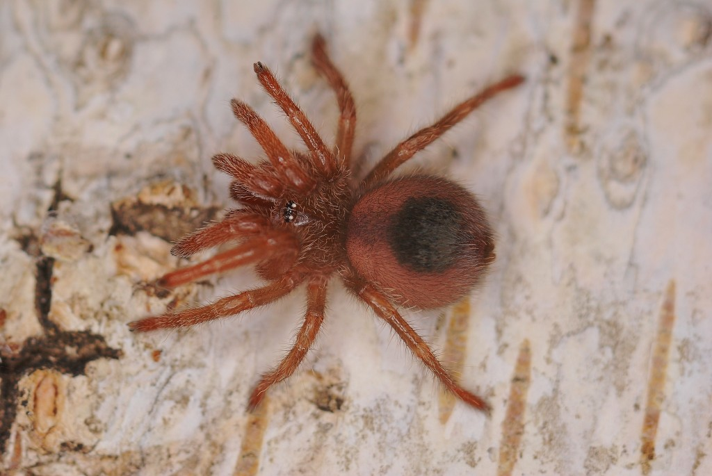 The latest Tweets from TheSpiderShop (@TheSpiderShop). Behind the scenes look at the UK's favourite Spider Pedlars. Account managed by humans who think .