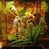 terrarium dla ornaty
