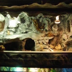 terrarium skalne