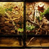 terrarium blizniacze