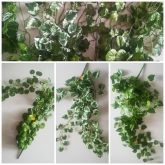 page mix rośliny